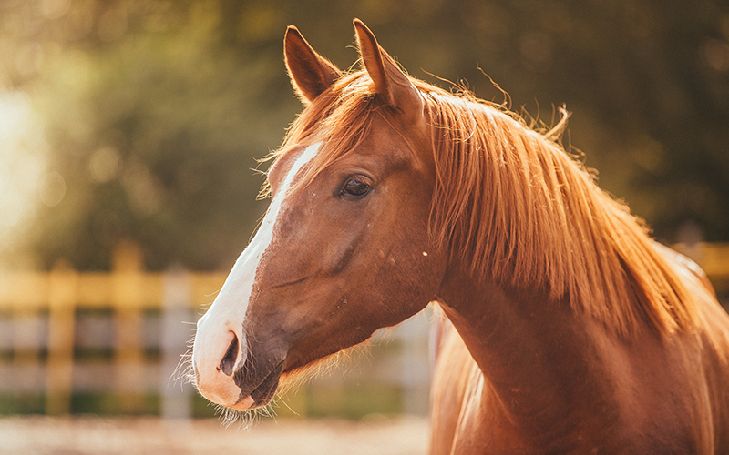 Build A Mustang >> Equine Mania - For Horse & Rider - Equine Mania