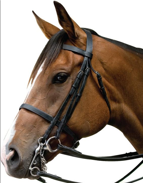 Kincade Show Weymouth Bridle Equine Mania
